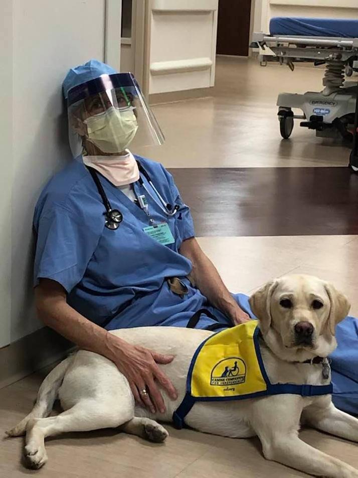 Therapiehund spendet Ärzten Trost